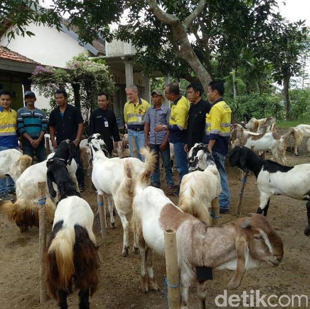 Kelompok Peternak Banyuwangi dapat Bantuan Kambing