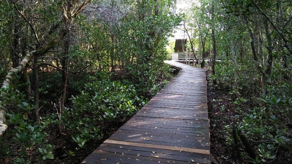 Tempat Liburan Kamu Selanjutnya: Hutan Mangrove Karimunjawa