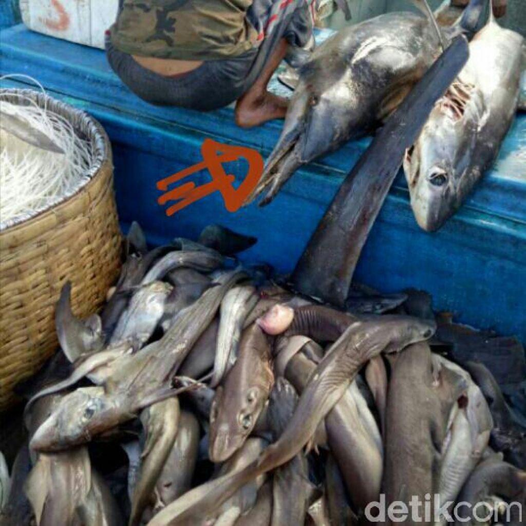 Polisi Tangkap Kapal Nelayan Bodong Bermuatan 300 Kg Hiu di Bali