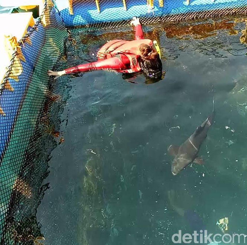 Sensasi Berenang Sambil Memberi Makan Hiu di Banyuwangi Underwater
