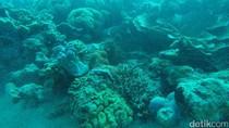 Diving di karimunjawa, Cemara Besar Tempatnya