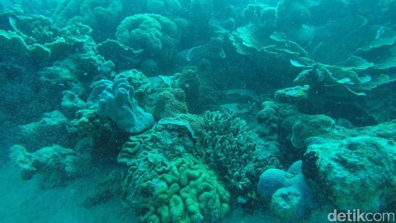 Foto: Karang-karang yang banyak jumlahnya di Cemara Besar (Bona/detikTravel)