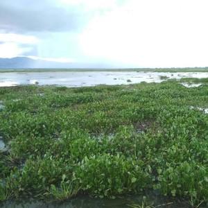 Menteri PUPR Siapkan 4 Mesin Pembersih Eceng Gondok Danau Limboto