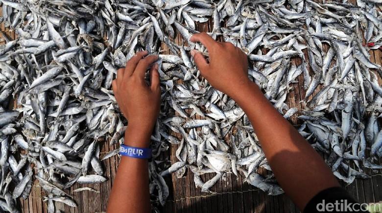Melihat Perajin Ikan Asin Muara Angke