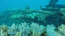 Foto-foto Wreck Diving di Karimunjawa