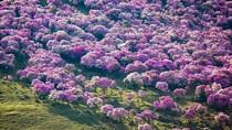 Acak-acak Padang Bunga Indah, Turis Dikecam Netizen