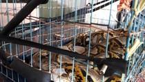 Balai Karantina Gagalkan Penyelundupan 253 Reptil Menuju Jepang