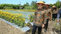 Lahan Pertanian di Tengah Kota Banyuwangi Disulap Jelang Agro Expo