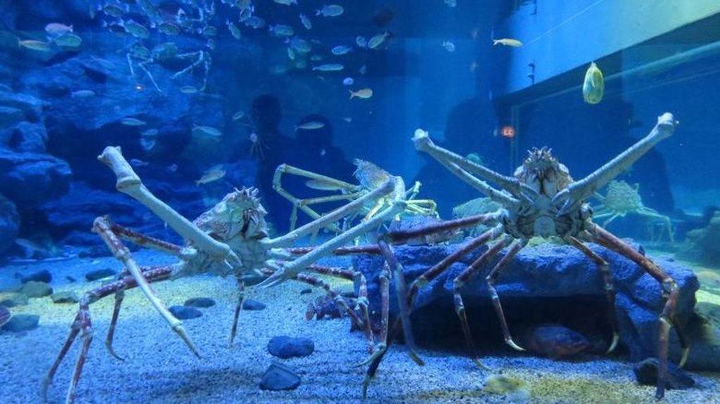 4 Hewan Laut Raksasa dan Tempat Melihatnya