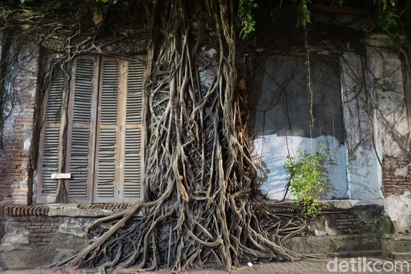Rumah akar ini berada di Kota Lama Semarang, tepatnya di seberang Museum 3D, berada di dalam gang yang diberi penghalang jalan. Lokasi ini cukup mudah ditemukan (Bonauli/detikTravel)