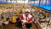 Cerita Mantan TKI Korsel Hadi Raup Untung Miliaran dari Ternak Ayam