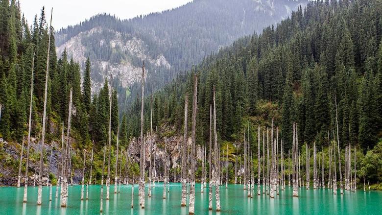 Danau Kaindy yang seolah punya hutan (Thinkstock)