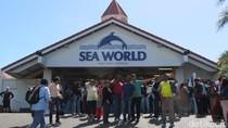 Sea World Australia, Dari Hiu Sampai Naik Helikopter