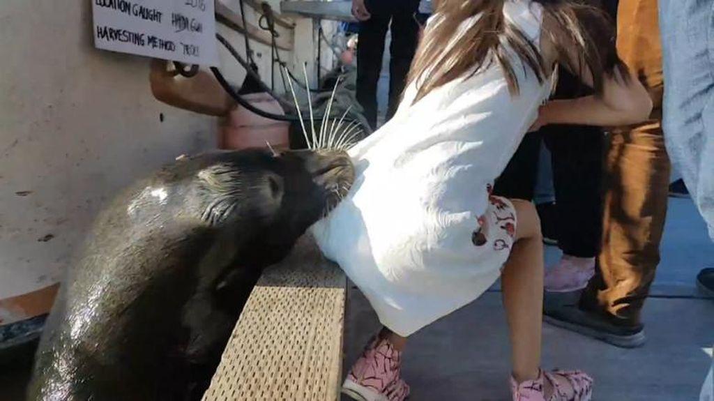 Cerita di Balik Video Viral Bocah 6 Tahun Diserang Singa Laut