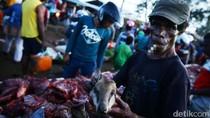 Di Merauke, Daging Kanguru Papua Dijual Rp 30 Ribu