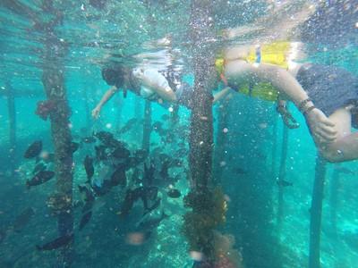 Snorkeling di Raja Ampat Cukup di Bawah Dermaga Kampung!