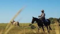 Peternakan di Australia Mulai Gunakan Teknologi Satelit