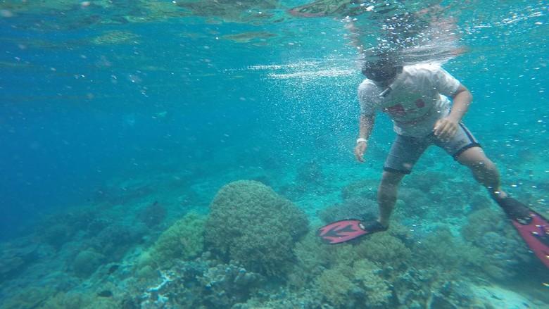 Snorkeling di Pulau Kri (Masaul/detikTravel)