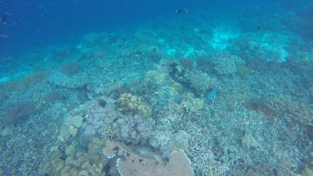 Karang-karang di Pulau Kri