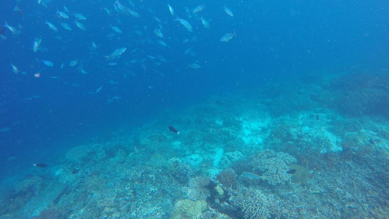 Foto: Pemandangan bawah laut sekitar Pulau Kri (Masaul/detikTravel)