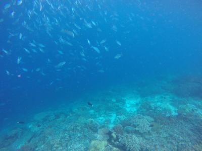 Karang Pulau Kri dan Kisah Kelam Raja Ampat di Masa Lalu