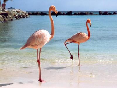 Turis Seksi & Tren Selfie Bareng Flamingo