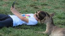 Seru! Kanguru di Kebun Binatang Ini Bisa Diajak Selfie