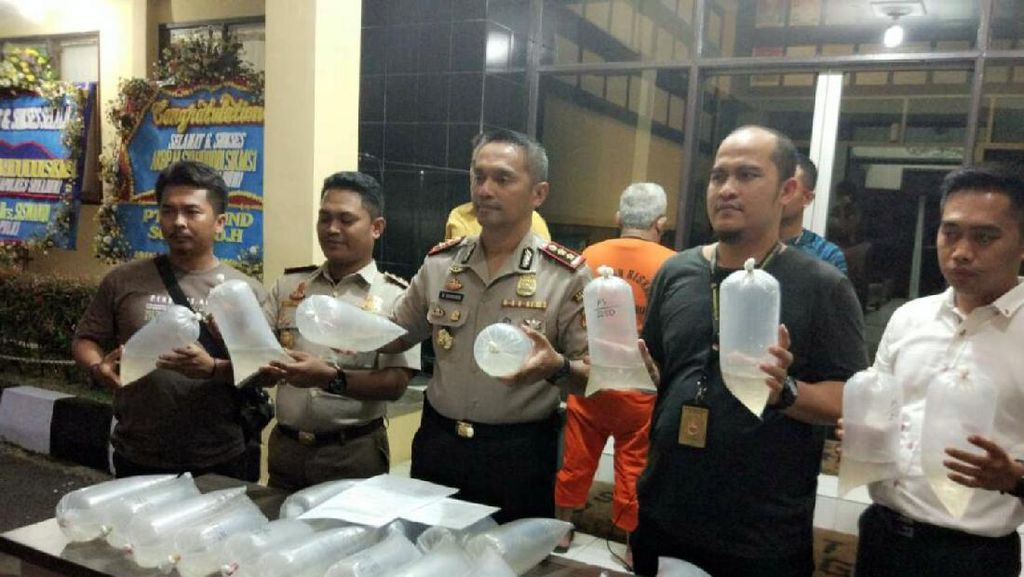 Polisi Gerebek Gudang Penyimpanan Benih Lobster di Sukabumi