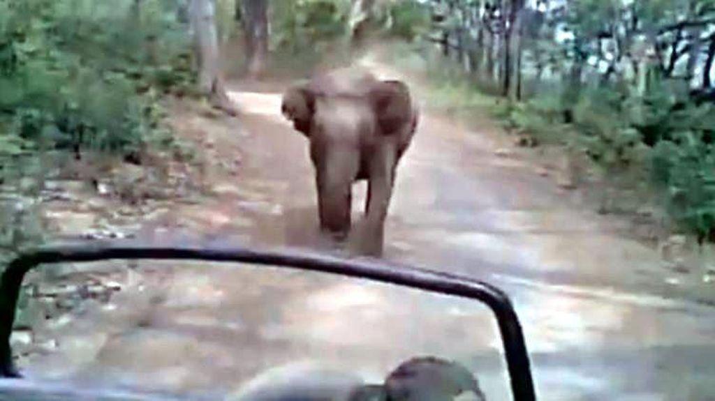 Lagi Asyik Safari, Turis di India Dikejar Gajah Ngamuk