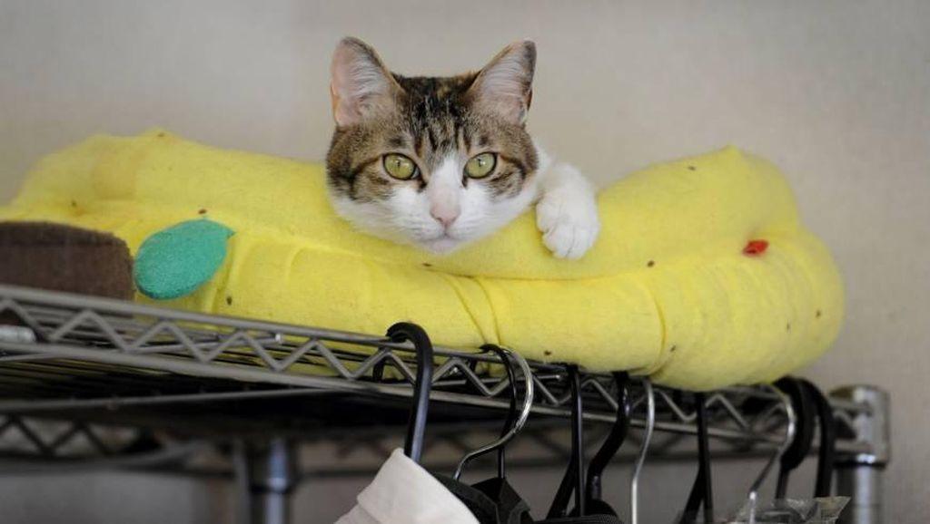 Kurangi Stres Karyawan, Kantor di Jepang Pekerjakan Kucing