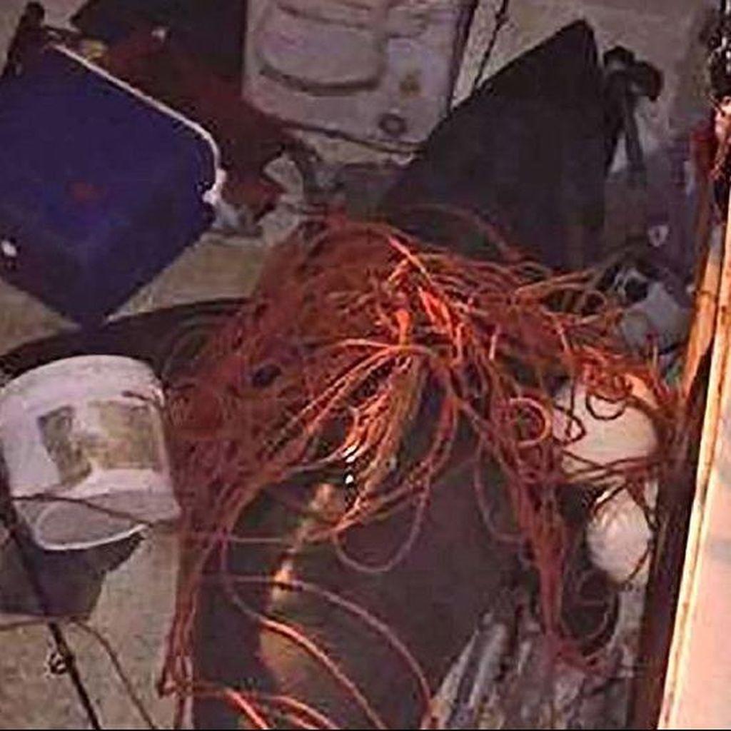 Seekor Hiu Melompat Masuk Kapal, Pria Australia Terluka