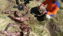 Cerita Perburuan Rusa di Aceh, Pakai Pawang hingga Anjing
