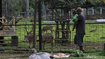 Penangkaran Rusa Jadi Tempat Ngabuburit Warga Soreang Bandung