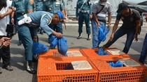 TNI Gagalkan Penyelundupan Trenggiling Rp 2,5 M Calon Bahan Sabu