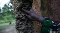 Jahilnya Tangan Manusia, Rumah Semut Saja Dirusak