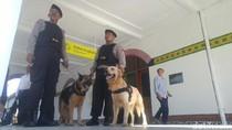 PT KAI Daop 4 Siagakan Anjing Pelacak Selama Angkutan Lebaran 2017