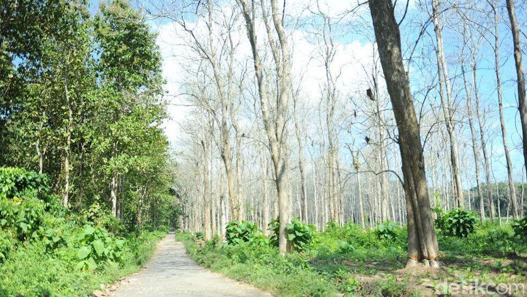 Jalan Akses Wisata Menuju Taman Nasional Alas Purwo Dibangun
