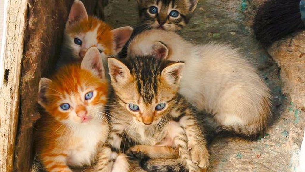 Tega Benar! 500 Ekor Kucing Ditangkapi untuk Jadi Santapan Restoran di China