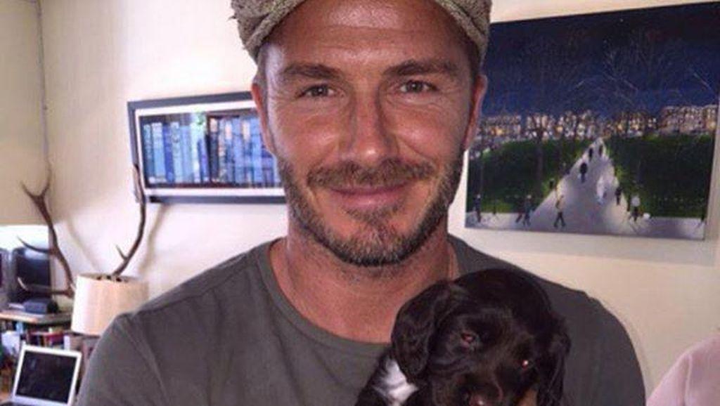 Riset: Pemilik Anjing Kecil Kemungkinan Berselingkuh