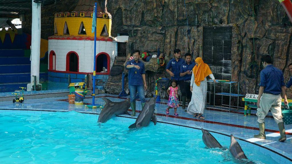 Mudik ke Kendal, Bisa Lihat Lumba-lumba yang Lucu