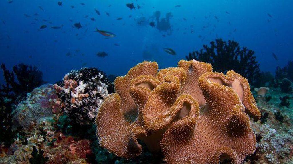 Pakar Konservasi Laut Australia Nilai Kebijakan Menteri Susi Efektif