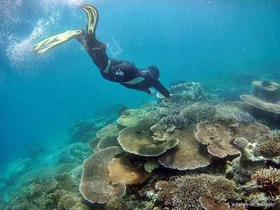 Masya Allah, Cantiknya Alam Bawah Laut Balabalagan