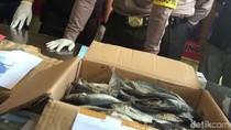 Gudang Produksi Ikan Berformalin di Lamongan Dibongkar