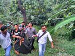 Mayat Wanita Tanpa Celana di Palimanan Cirebon Diduga Gelandangan