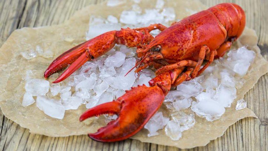 Pengadilan Tinggi Italia Putuskan Larangan Menaruh Lobster di Dalam Es