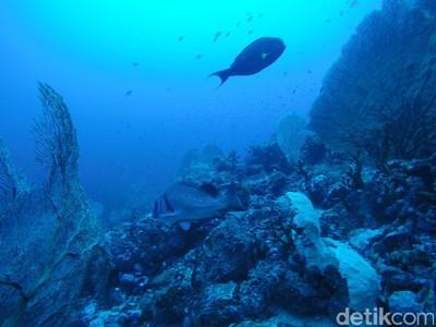 Mudik ke Sabang, Yuk Diving di Batee Tokong
