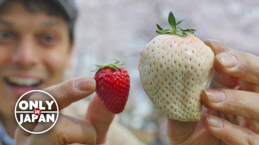 White Jewel, Strawberry Warna Putih Langka dengan Harga Rp 130.000 per Buah