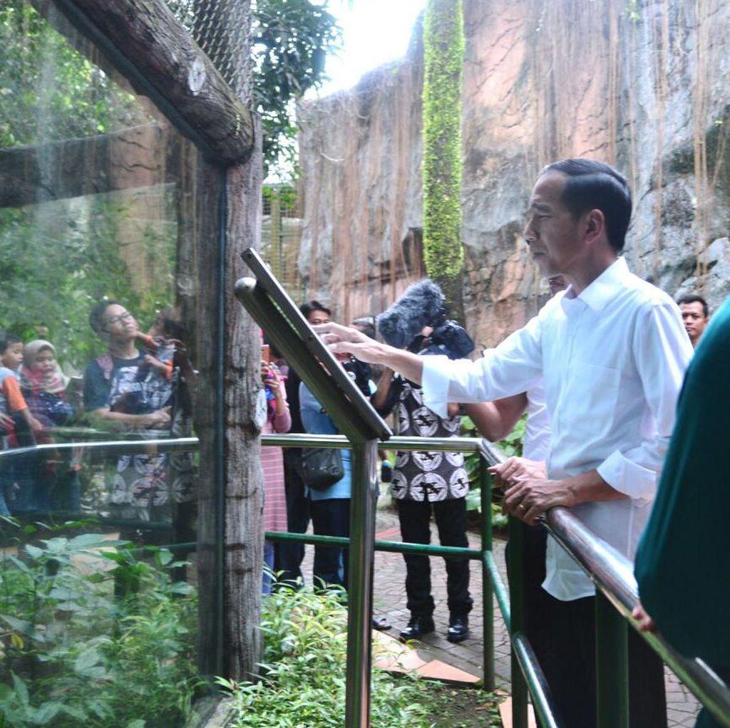 Liburan ke Ragunan, Jokowi dan Rombongan Tetap Bayar Tiket Masuk