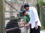 Mengenal Gorila di Ragunan yang Diberi Makan Jokowi