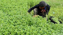 Kementan Fokus Tingkatkan Produksi dan Kesejahteraan Petani